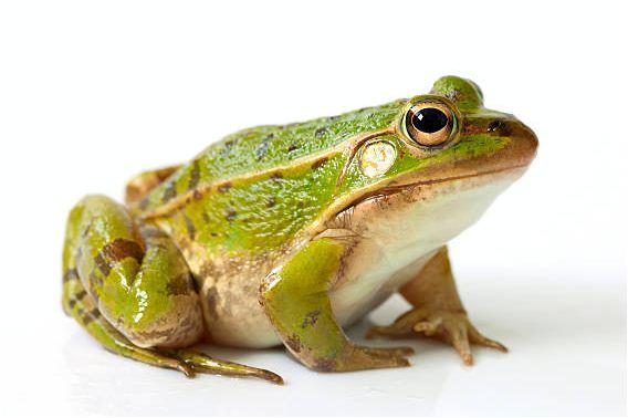 Sapne Me Frog Dekhna