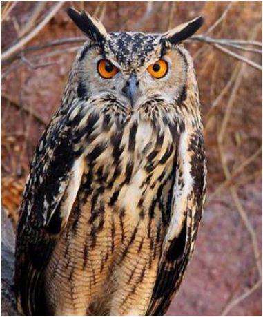 Sapne Me Owl Dekhna